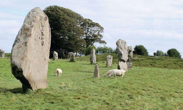 Sheep contentedly graze among the stones of Avebury.