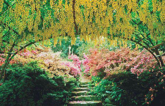 Bodnant Garden's famed laburnam arch draws springtime visitors to North Wales.
