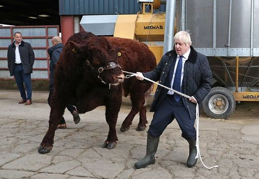 British Prime Minister Boris Johnson leads a bull around a pen as he visits Darnford Farm in Banchory near Aberdeen on September 6, 2019 in Aberdeen, Scotland. The Prime Minister travelled to Aberdeenshire visiting Peterhead fish market and a farm to coincide with the publication of Lord Bew's Review and the announcement of additional funding for Scottish farmers. He is expected to stay overnight at Balmoral with the Queen. (Photo by Andrew Milligan - WPA Pool/Getty Images)