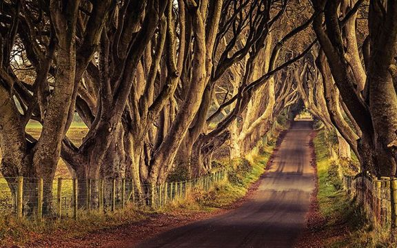 The Dark Hedges, in County Antrim.