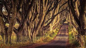 Thumb dark hedges tourism ireland