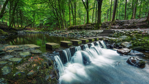 Thumb_tollymore_forest_park